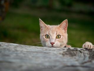 Cache-cache chat... trouvé