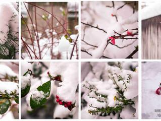 Fleurs de neige et fleurs en neige