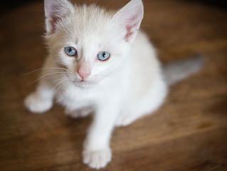 Portraits de petit chat