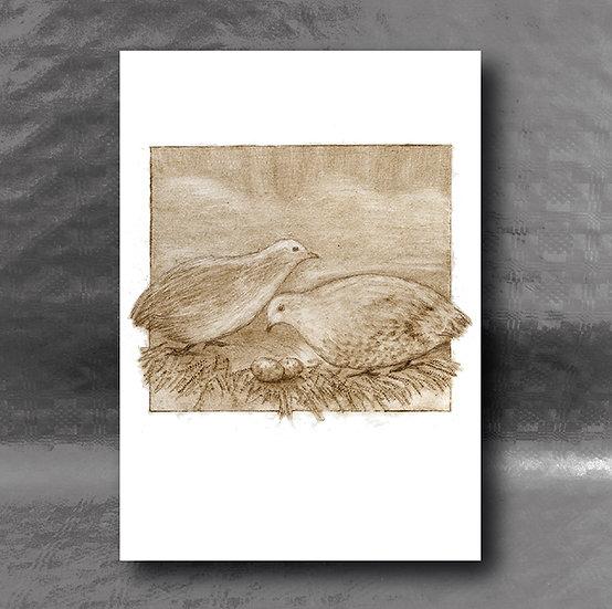 Japanese Quail Card