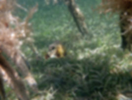 1-Princess Bay, smooth trunkfish1.jpg