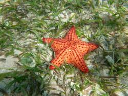 1-Princess Bay, cushion star.jpg