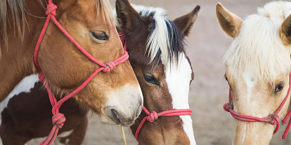 Übungsnachmittag für Tierkommunikatoren