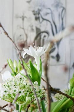 seasons tulips