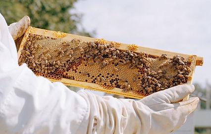 casa do apicultor tudo para apicultura e