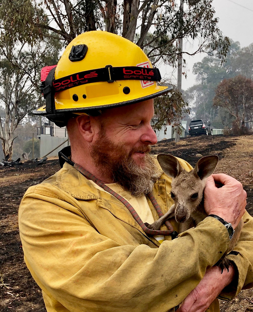 LTBMU Fire Captain Dave Soldavini, holds a Joey that was rescued from the wildfires.