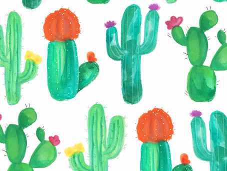 FREE IPHONE WALLPAPER | BLOOMING CACTI