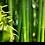 Thumbnail: Bamboo bodycreme 3oz