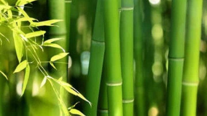 Bamboo  16oz