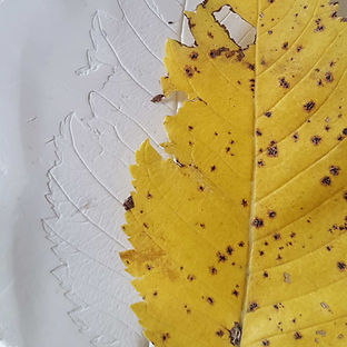 Elm-leaf-impression.jpg