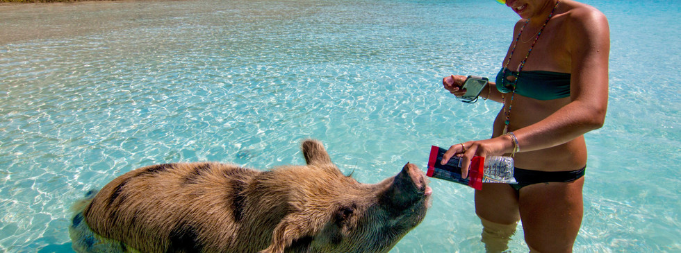 Swimming with the Pigs, Bahamas