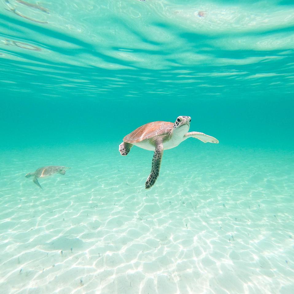 Turtles, Nassau Bahamas