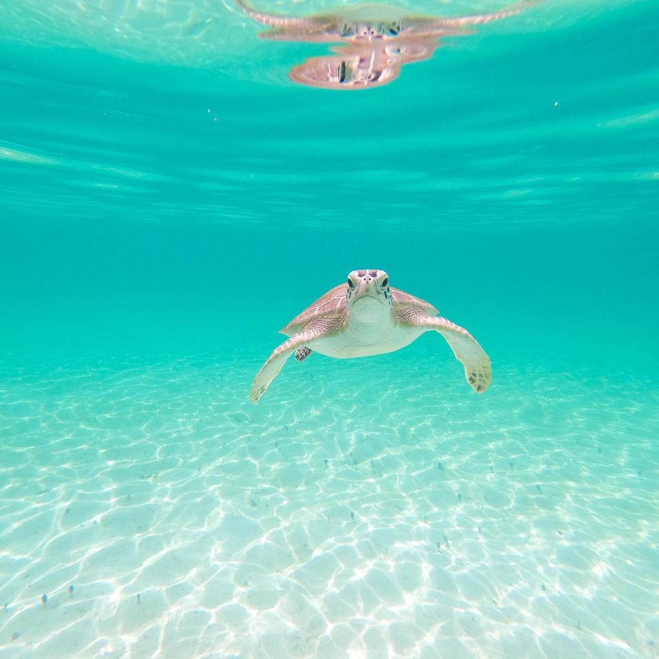 Rose Island, Nassau Bahamasg