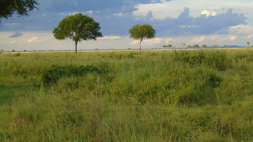 Lvi v trávě - Afrika.jpg
