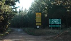 Belanglo_State_Forest