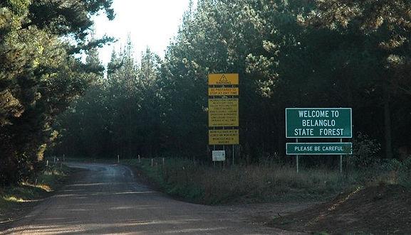 Belango forest