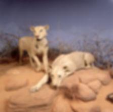 Lions of Tsavo3.jpg