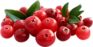107-1072184_1-2-kg-chopped-cranberries-c