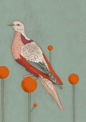 piccione sofar 1.jpg