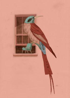 uccello sofar 1.jpg