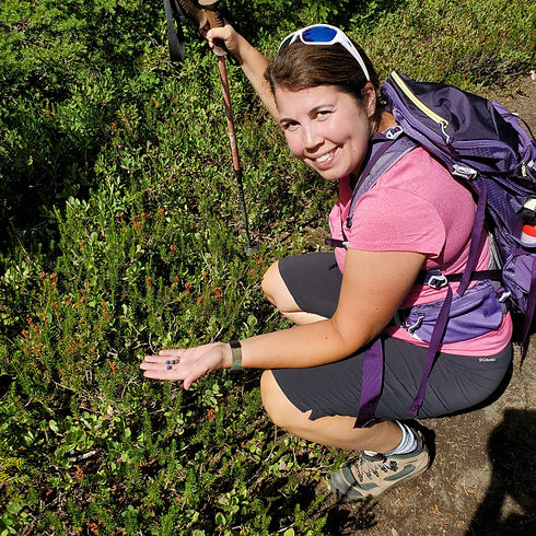 Woman kneeing down on a hiking trail picking blueberries