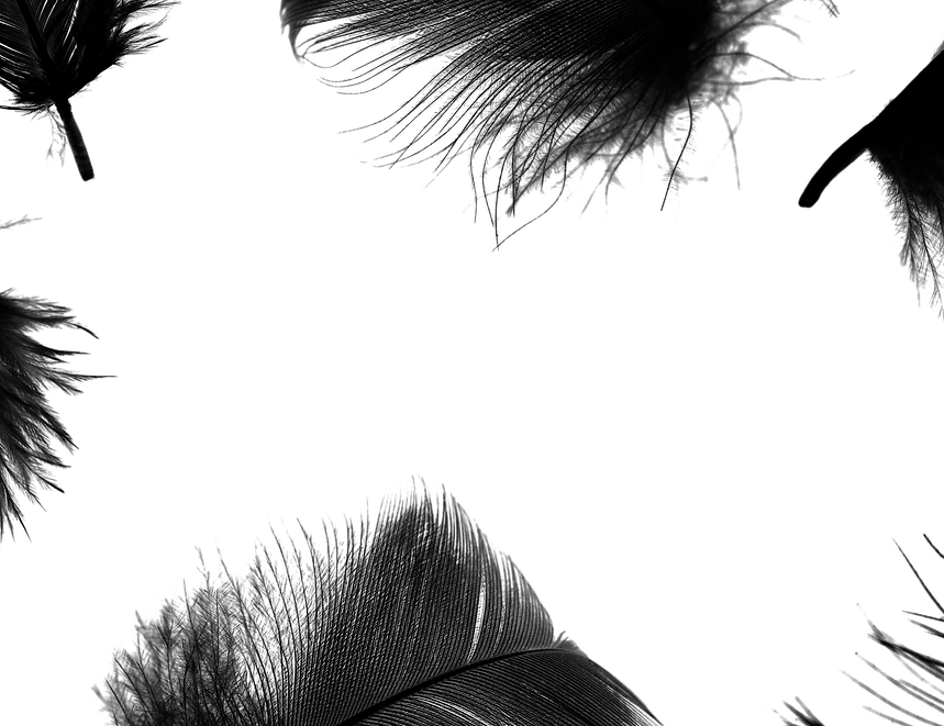Contact feathers.png