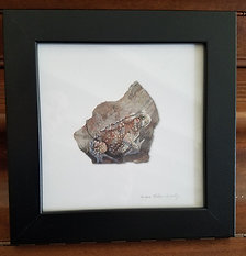 Framed Toad 1