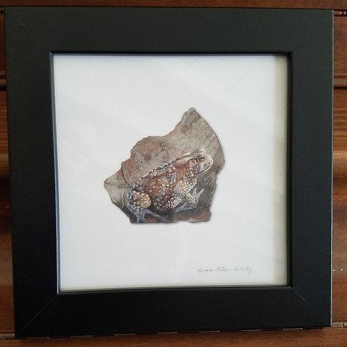 Framed Toad 1