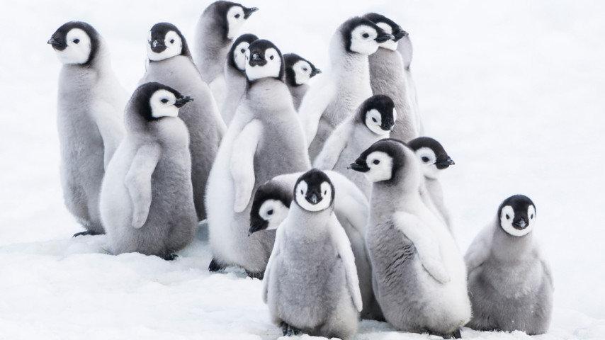 Pingvinresan 2