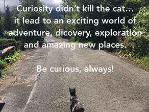 Curiosity did not kill the cat...