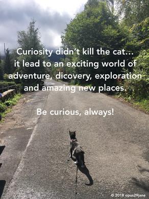 Guiding principles #8 - Curiosity