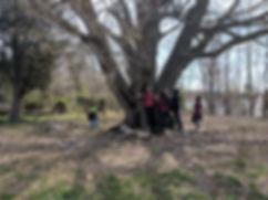 Oak_Tree_Hug_TMS.jpg