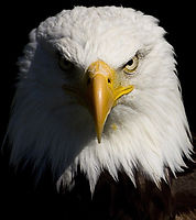 eagle_edited.jpg