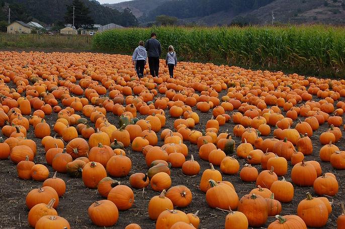 pumpkin-patch-2849549_1920.jpg