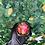Thumbnail: Kitty Couples