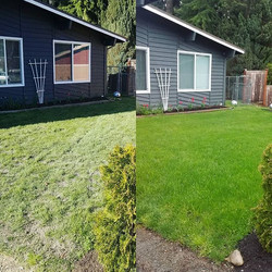 Before and After reseeding and adding to