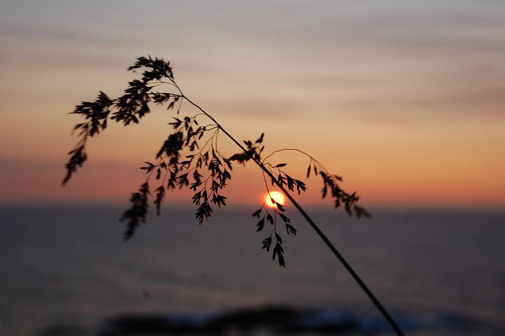 os cuatro acuerdos, the four agreements, don miguel ruiz, miguel ruiz, la maestria del amo, isol, mi blog, isol fernandez, crecimiento espiritual, desarrollo personal