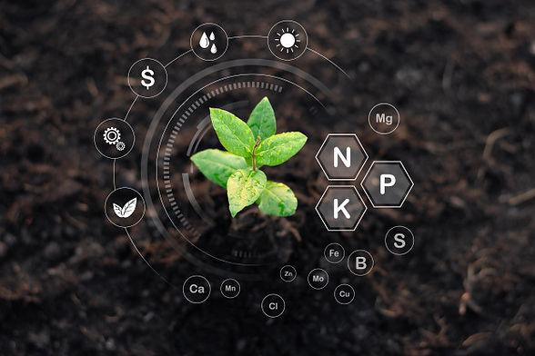 seedlings-are-growing-from-fertile-soil-