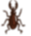 logo1_แก้ไข.png