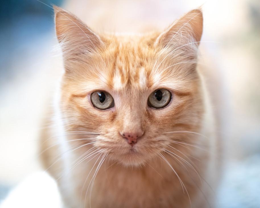 cat closeup.jpg