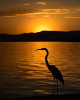 silhouette bird in mexico.jpg