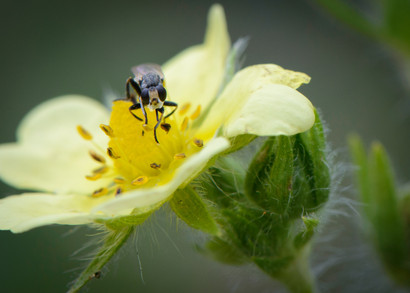 insect on yellow flower.jpg
