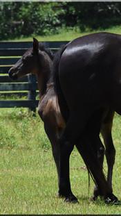 In-Utero Foals