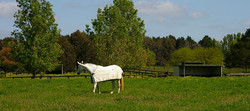 Relaxed horse environment