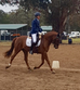 Young dressage