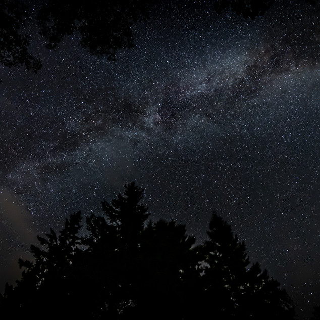 Milky Way Tree Line