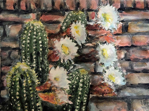 Marrero.Cactus flower.jpg