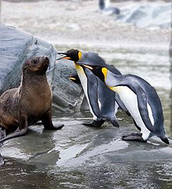 seals and penguins LR.jpg