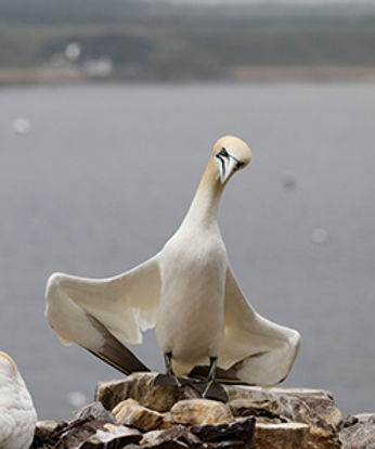 Gannet about to have a courageous conversation