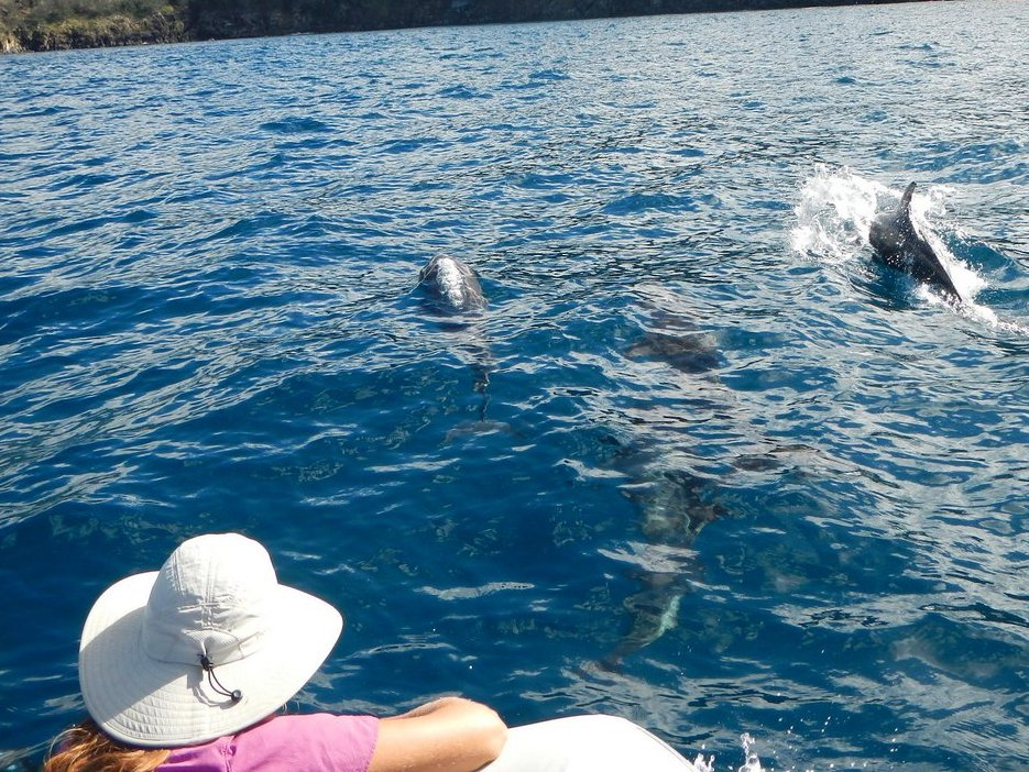 Watch dolphins romp and play